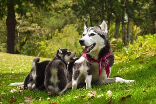 Quale animale è meglio tenere in casa?